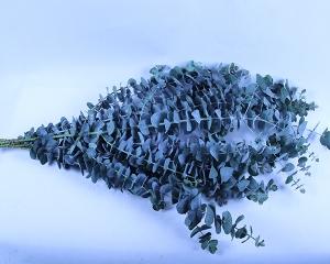 蓝宝贝小叶单枝切花